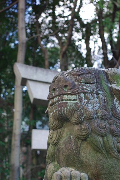 針綱神社狛犬 4