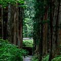 写真: 戸隠神社奥社への道