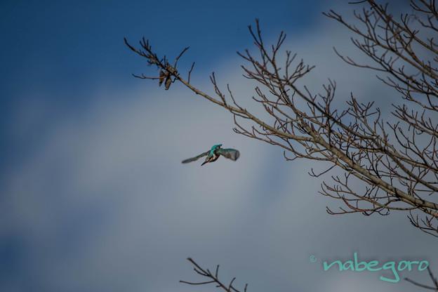 青空へ飛ぶ
