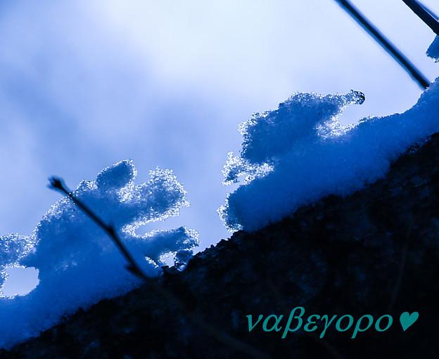 写真: 雪ワンコ