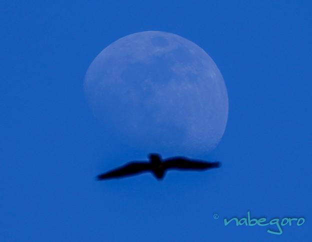 月を背負う@@