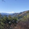 Photos: 都民の森へ行く途中の富士山