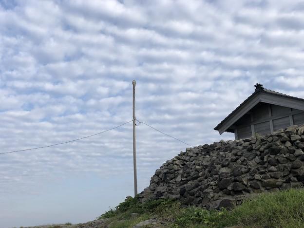 舳倉島のハヤブサ