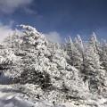 Photos: 美ヶ原高原の雪景色