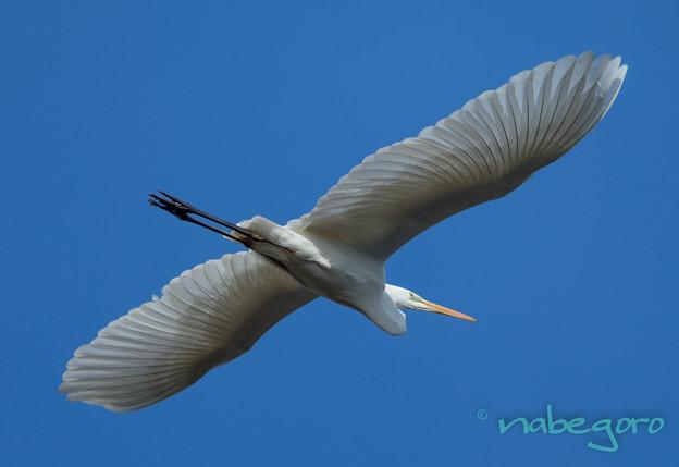 美しい羽根-2