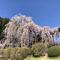 Photos: 身延山の春