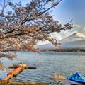 Photos: 桜と富士山
