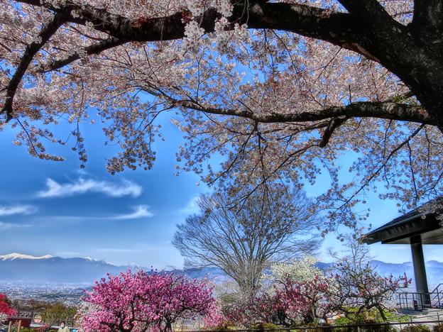桜と桃と残雪山