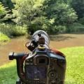 カメラの中の翡翠