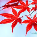 Photos: 紅色-6