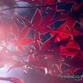 Photos: 紅色-3