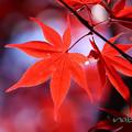 Photos: 紅色-4