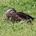 草の中で昼寝