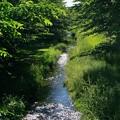 野川の歩き撮り_9