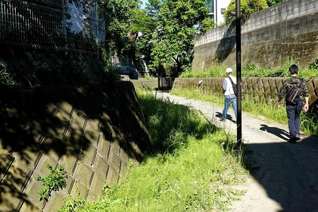 野川の歩き撮り_10