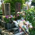 Photos: 桜桃忌