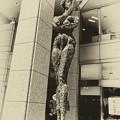 Photos: 都庁中庭の女性たち