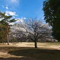Photos: 公園の梅林_2