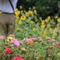 Photos: ひまわり畑で撮影