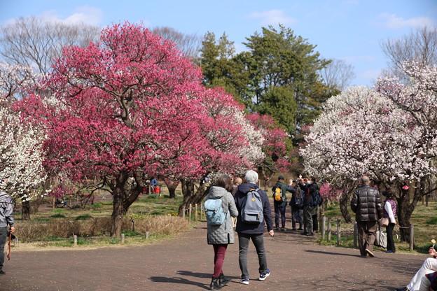 Photos: 観梅散歩