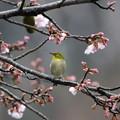 Photos: お花見かな?