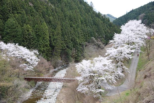 山村に桜咲く