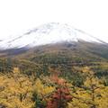 黄葉と雪化粧