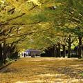 Photos: 黄色い絨毯!