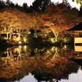 Photos: 夜の微笑み