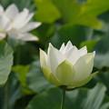 写真: kodaihasu (40)