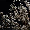 Photos: 春の夜半