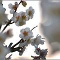 写真: 浅き春