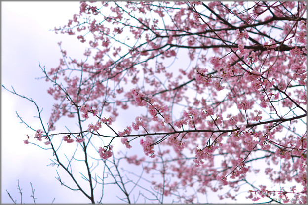 春のまぼろし