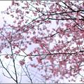 写真: 春のまぼろし