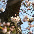 Photos: はかなき花