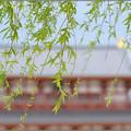 Photos: 青い風