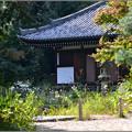 Photos: 秋の庭
