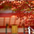 秋も終わり