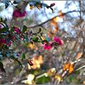 Photos: 冬の花