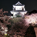 石川門の夜桜