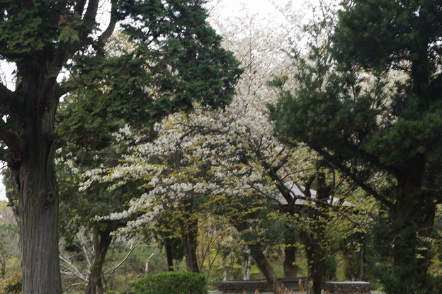 姫路城の写真0198