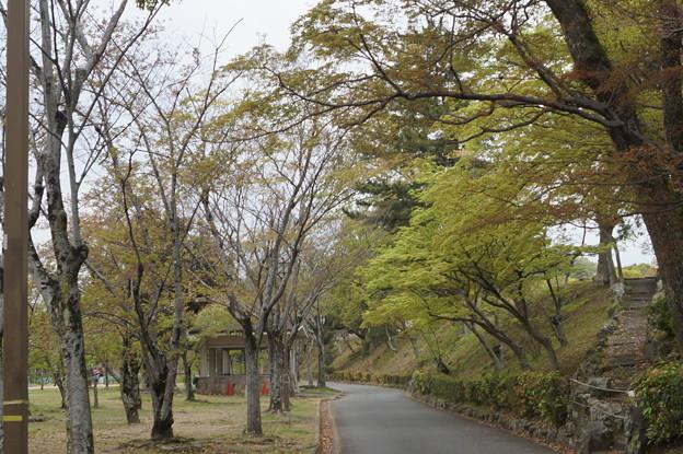 姫路城の写真0199