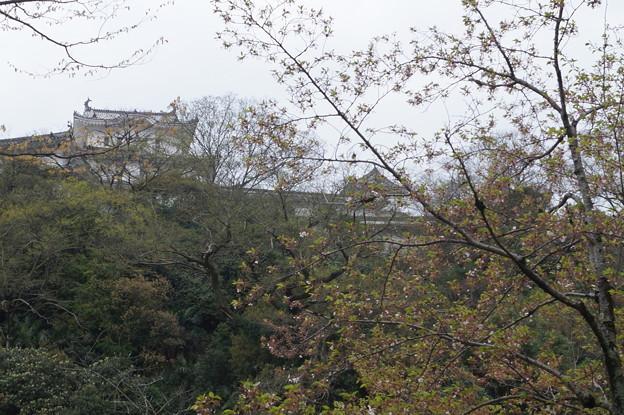 姫路城の写真0201