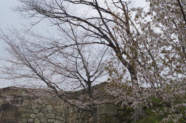姫路城の写真0204
