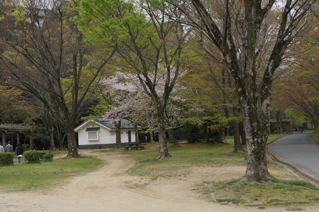 姫路城の写真0206