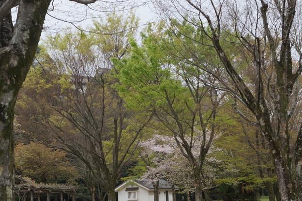 姫路城の写真0207