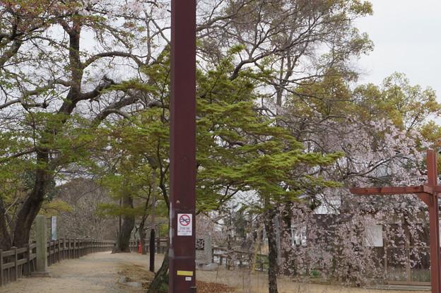 姫路城の写真0209