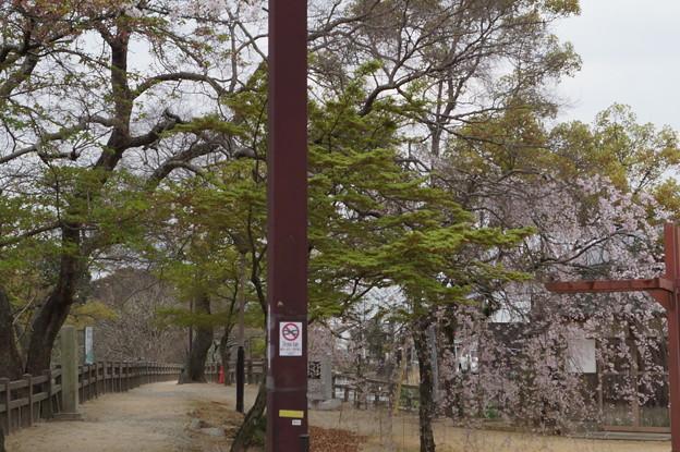 姫路城の写真0210