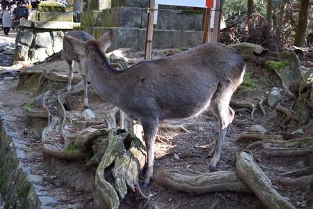 冬の奈良市内の写真0036