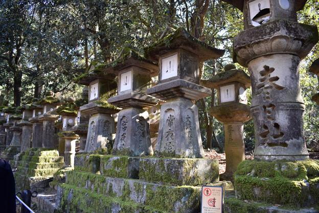冬の奈良市内の写真0039